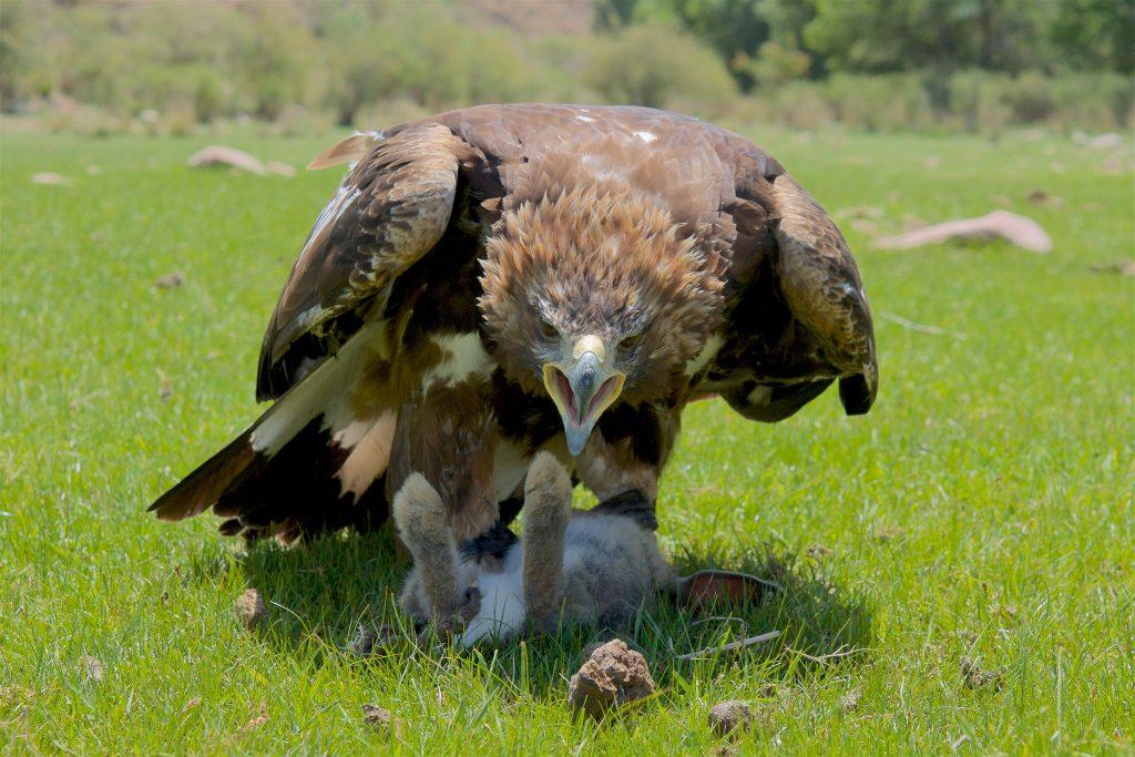 2009 July Eagle